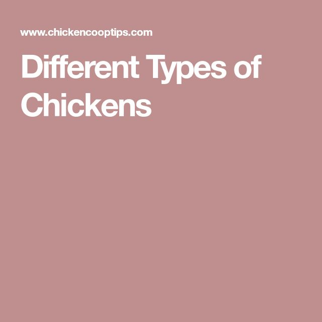 Different Types of Chickens