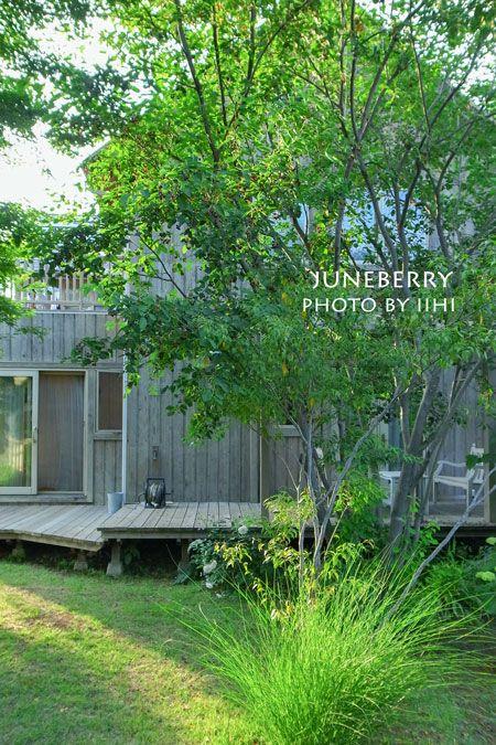 ジューンベリーの木蔭で。 | いいひブログ - いいひ住まいの設計舎