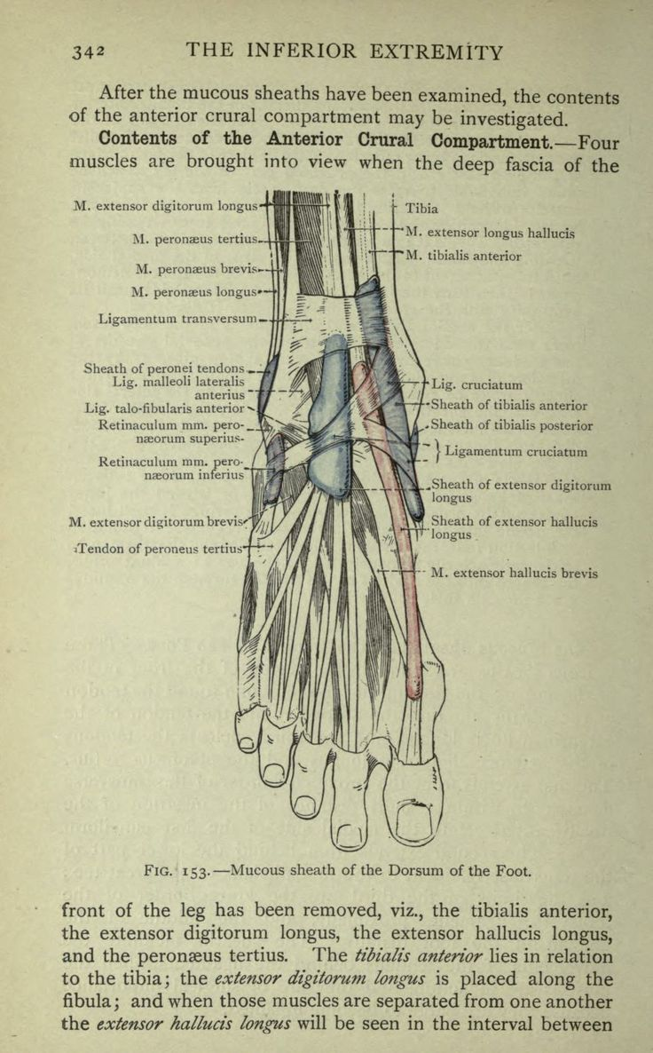 175 best Anatomy images on Pinterest | Le\'veon bell, Anatomy and ...