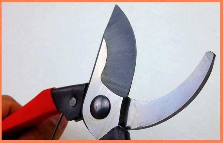 Garden Supplies 8inch Garden scissors Stainless steel scissors Garden Pruning Tools Fruit gardening shears tijeras Hand scissor