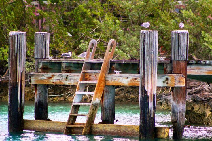 Birds on a dock