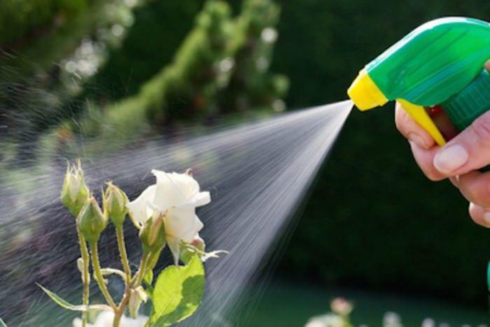 Διώχνω από τα φυτά Έντομα και Αρρώστιες με φυσικό τρόπο