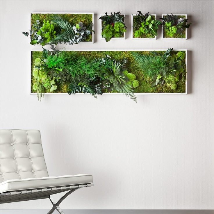 Echtpflanzenbilder Wand-Begrünung aus Echtpflanzen. Speziell entwickelte Konservierung: 100 % Natur – 0 % Pflege.