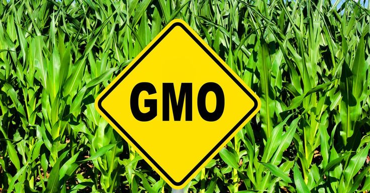 In the August 20 issue of the New England Journal of Medicine, two respected experts on pesticides and children's environmental health call for the FDA to require mandatory labeling of GMO foods. ... #KnowledgeIsPower!#AwesomeTeam♥#Odycy☮:-)