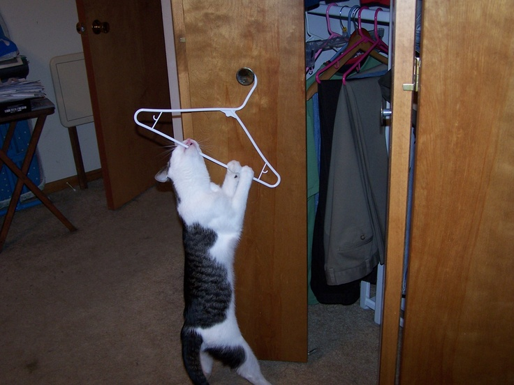 I can help with hanging up the clothes...even though I don't wear them!