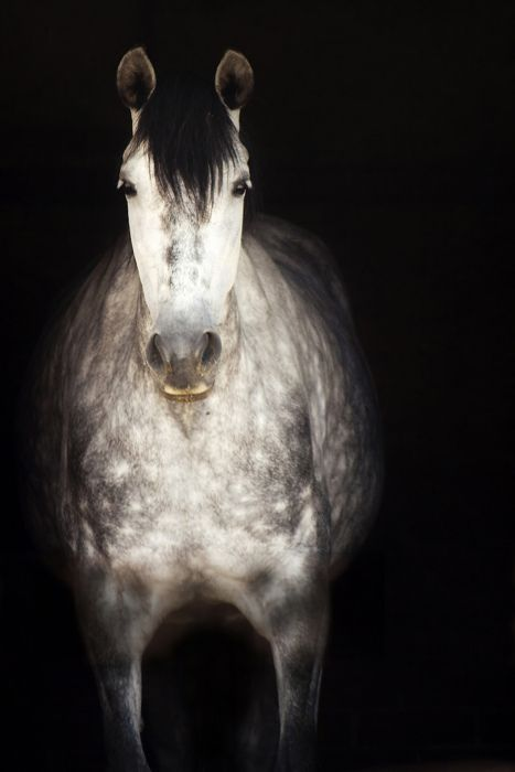 There is something about riding on a prancing horse that makes you feel like something, even when you aint worth a thing. ~ Will Rogers