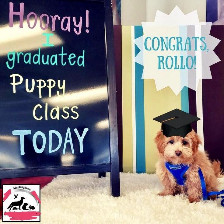 My dog's puppy school just emailed me this picture of my puppy. http://ift.tt/2s9z489