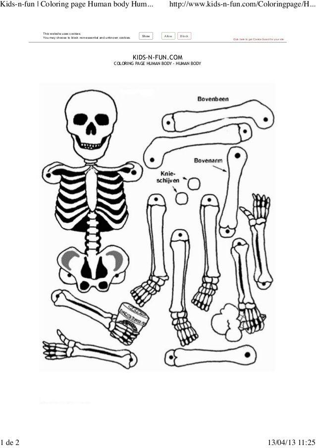 Esqueleto x montar by Blanca Arbona via slideshare
