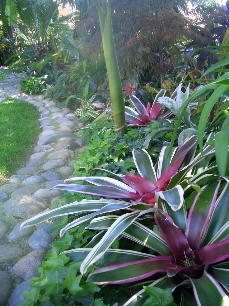 Bromeliads in landscaping