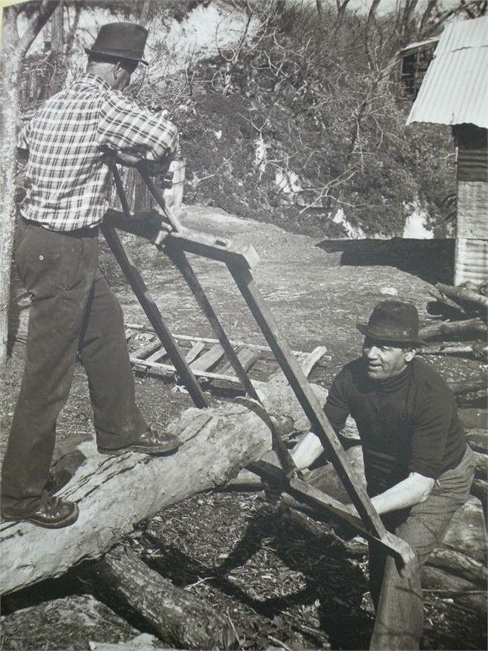 """Raccolta di antiche foto di vita di campagna primi anni 1900 - I """"segantini"""" all'opera per ricavare assi da tronchi."""