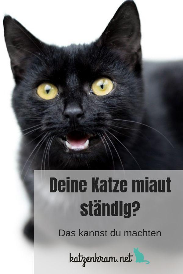 STÄNDIGES Miauen deiner #Katze kann sehr nerven. So kannst du herausfinden, war… – Katzenkram