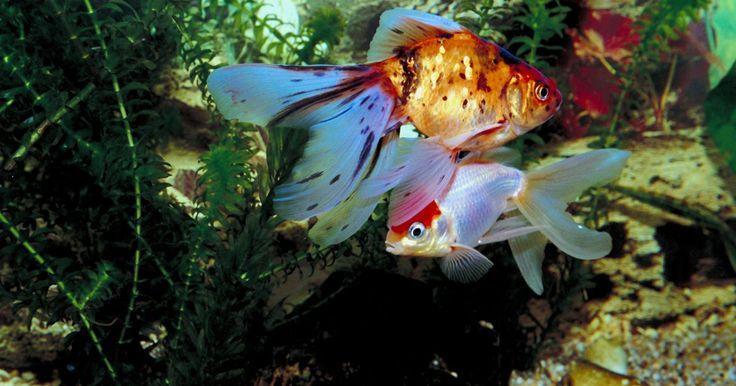 ¿La iluminación LED es buena para las plantas de acuario?