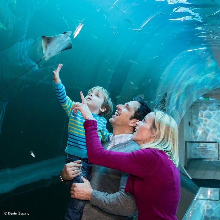 The fascinating underwater world is just inches away. A perfect illusion of walking through the underwater world enabled by #originalplexiglas #plexiglas #evonikplexiglas #acrylic hausdesmeeres #vienna #wien #fish #underwater