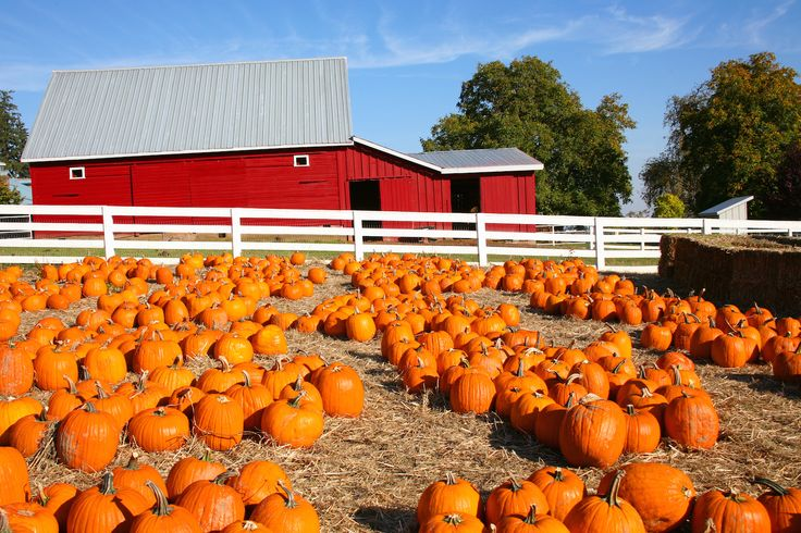 Visit the largest pumpkin patches all across the U.S. and pick out your perfect pumpkin!