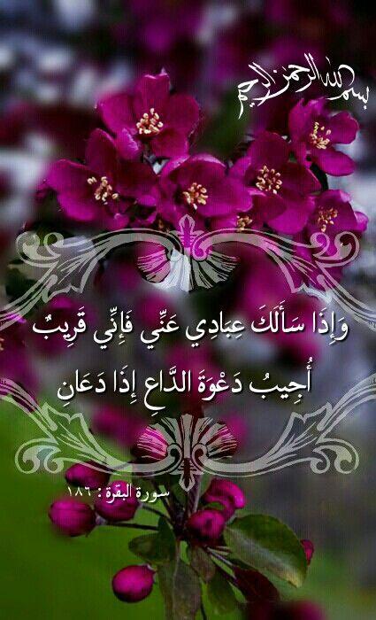 #آية_جميلة  #قرآن_كريم  كيف تقنط من الإجابة وربك هو من وعدك أنه سيستجيب لك لما هو خير لك و#رب_الخير لا يأتي إلا بالخير