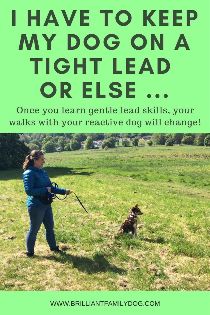 But I Have To Keep My Dog On A Short Lead Or Else Insert
