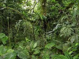 bosque tropical estacional semiperenne de clima monzónico, con una estación muy lluviosa y una estación seca en la que algunos árboles pierden su follaje dependiendo de la severidad de la sequía. Con un promedio de 2000 mm de precipitación anual, es un bosque de transición entre el bosque seco y la selva húmeda.