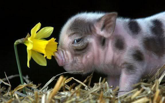 Rare-Precious-Moments-Animal-Life-3