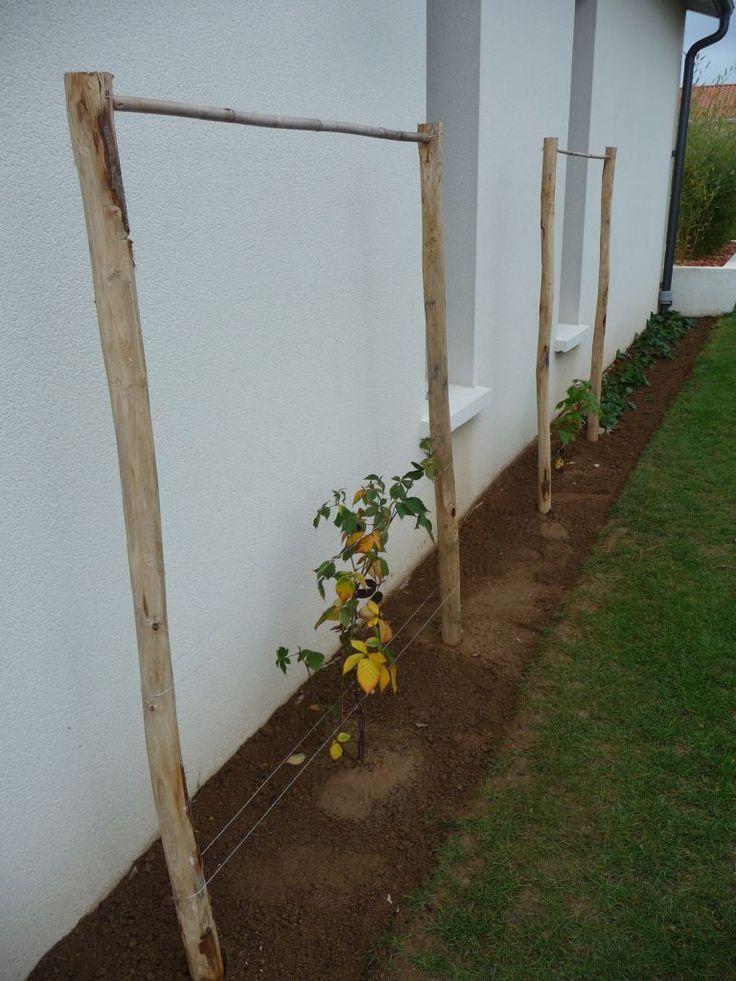 photo plantation d 39 un murier et d 39 un framboisier avec l jardin pinterest jardins. Black Bedroom Furniture Sets. Home Design Ideas
