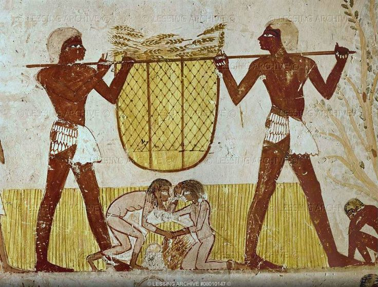 Men transporting corn. In the background slave girls fighting for the left-overs. Detail of a wallpainting in the tomb of Mennah, scribe of the fields and estate inspector under Pharaoh Thutmosis IV (18th Dynasty, 16th-14th BCE) in the cemetery of Sheikh Abd al-Qurnah