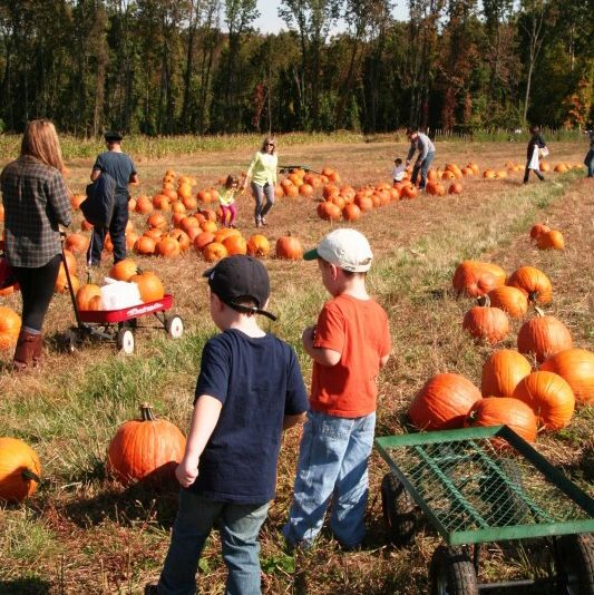 8 Best Top 8 Pumpkin Picking Farms For Families In New Jersey Images On Pinterest Farms