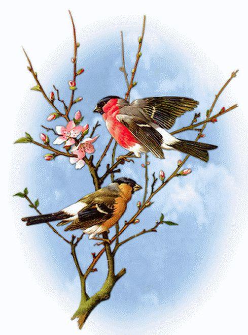 Картинки леса животных птиц у кустарников эти женщины