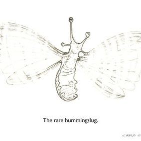 The rare hummingslug