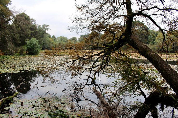 https://flic.kr/p/TASZus   Parque Saval   Valdivia, Chile