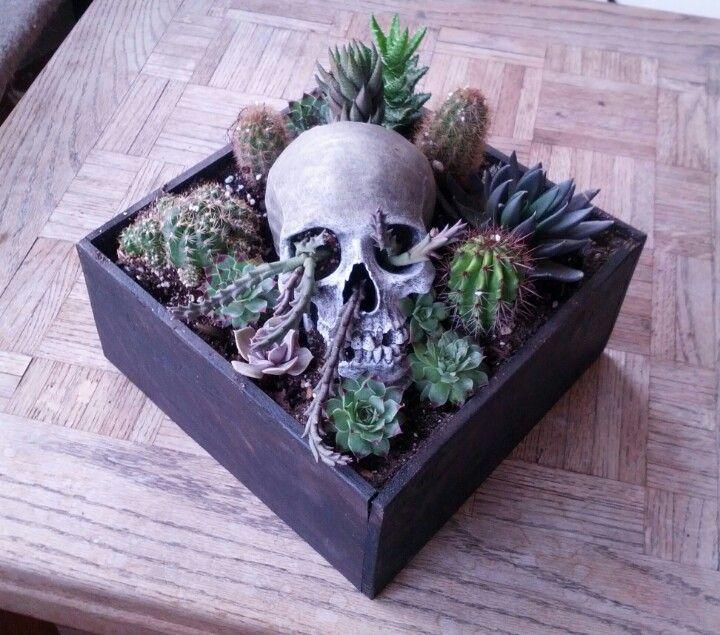 The 25 best Mini cactus garden ideas on Pinterest Mini cactus