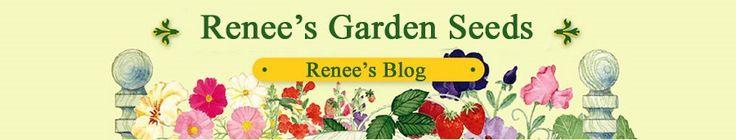 Renee's Garden Seeds: Renee's Blog, make a real change for kids.
