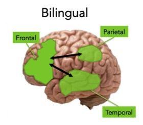 Hovoriť dvoma jazykmi je pre mozog prospešné | CEZ OKNO