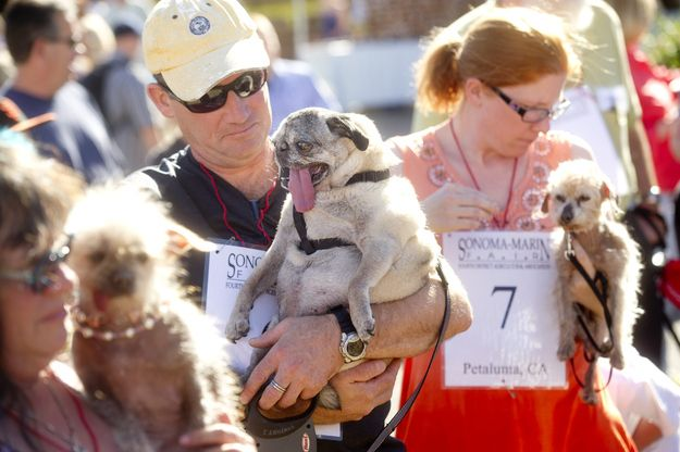 Highlights From The 2013 World's Ugliest Dog Contest