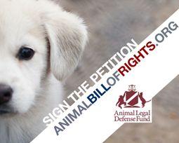 #AnimalLegalDefenseFund  #Animal Bill of  #Rights   https://org2.salsalabs.com/o/5154/p/dia/action/public/?action_KEY=5078  #animals    #LegalDefense    #LegalDefenseFund   #BASICLEGALRIGHTS    #basicRights    #congress    #humaneLaws     #sentientBeings   #legislation  #basicRights  #AmericanCitizen   #American  #citizen  #laboratoryAnimal  #laboratoryAnimals   #farmedAnimals   #companionAnimals  #companionAnimal   #wildlife  #naturalHabitat   #ADFL
