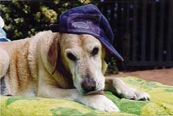 Dog friendly accommodation Bellarine Accommodation