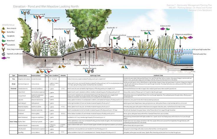 Wetland Design Google Search Landscape Diagram