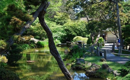 262 best cheap and free travel images on pinterest free travel airfare deals and best places for San francisco botanical garden hours