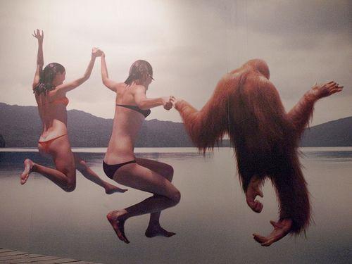 + orangutan