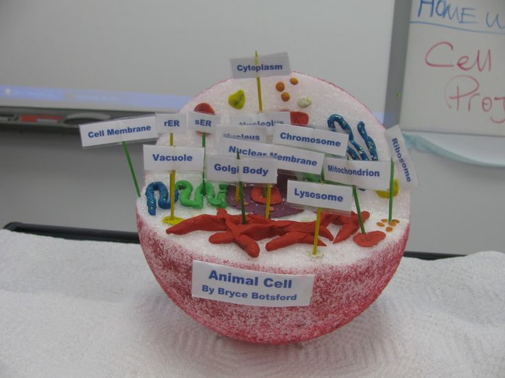 Ms. Corson's Science Class: Cell Model Project