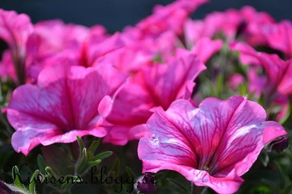 -Flowers