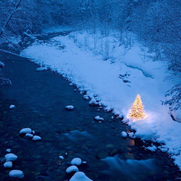 Blue Christmas Tree Wallpaper: Winter Wonderland: Snowy Winter Scenes & Christmas Trees