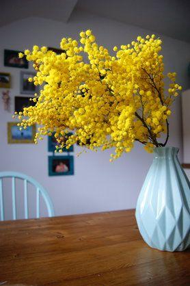 Mimosen - neue Lieblingsvasenfüllung