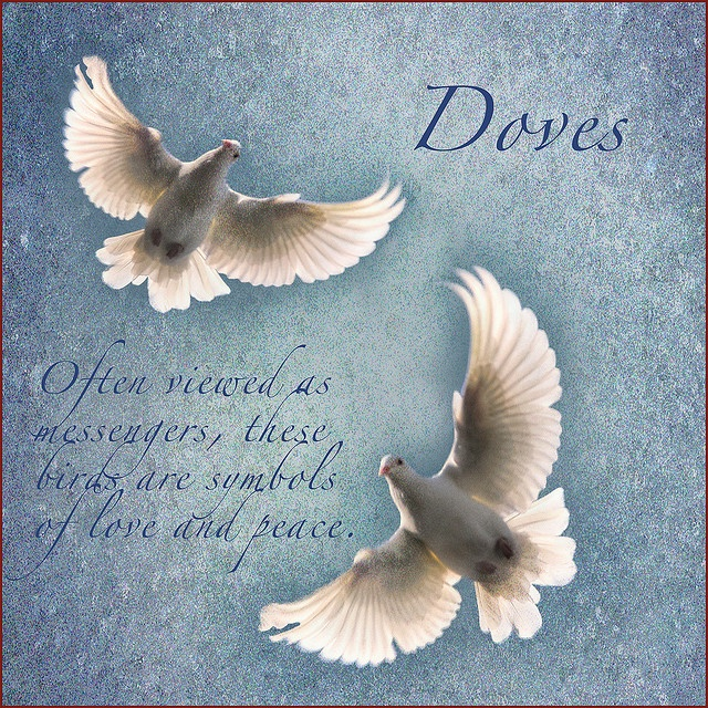 Kate - Doves (often viewed as messengers, these birds are symbols of love and peace)