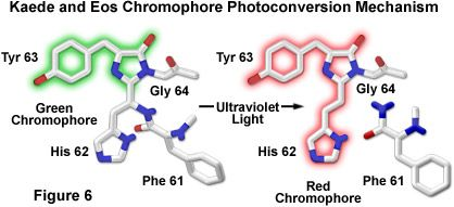 Olympus Microscopy Resource Center   Confocal Microscopy - Optical Highlighter Fluorescent Proteins (tdEOS)