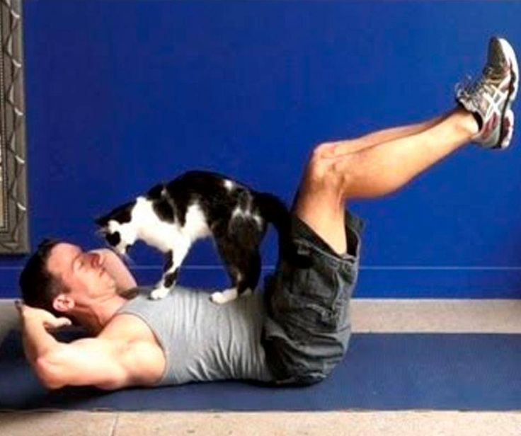 #WellnessWednesday: Activity is good for our pets. You should try to spend about 10-15 minutes a few times each day engaging your cat in some form of activity. Young cats and kittens will usually take the initiative in engaging you in play or they will find their own entertainment. #PetPoolWaehouse