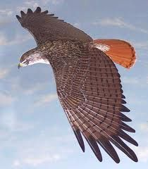 25th of Sep. While @work when I looked up, a bright sky and a hawk! It was flying above us then show it to my colleagues.