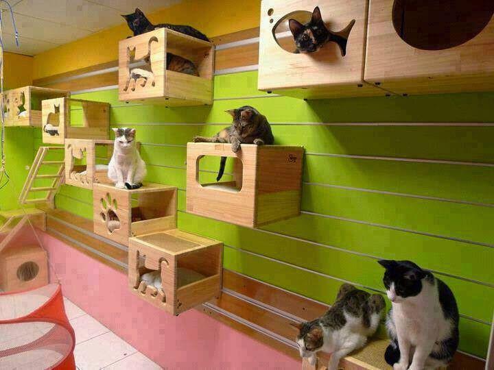 Condomínio de Gatos