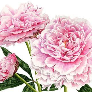 """""""Sie können alle Blumen schneiden, aber Sie können nicht verhindern, dass der Frühling kommt."""" – Pablo Ne …"""