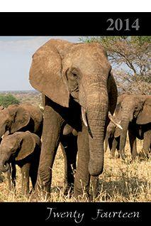 Elephant Diary