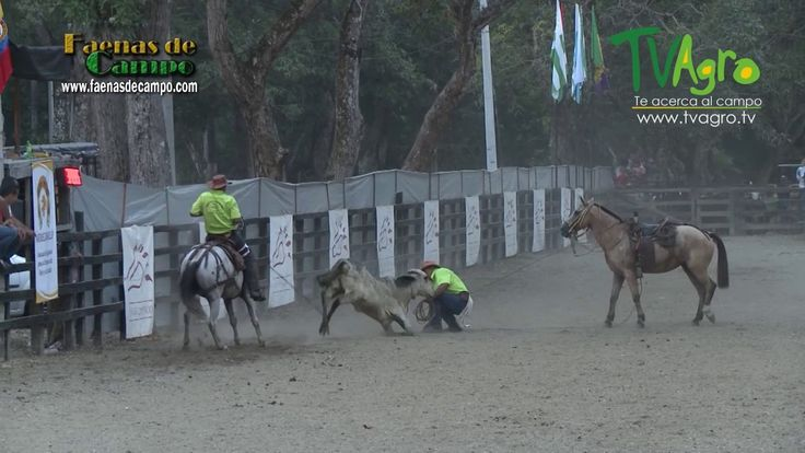 Competencia Regional de Vaqueria Mariquita Tolima III- TvAgro por Juan G...