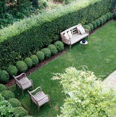 Pleached Hornbeams hedge against a fence with box topiaries trim. Love this as a border to fence for back yard!